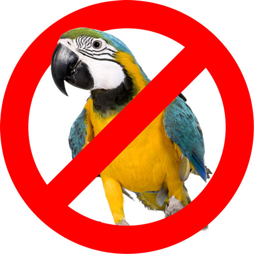 Parrot-Banned-500